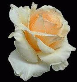 "Picture of Fragranciaa ""Rosa tea"""