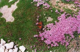 """Picture of Fragrancia """" Flora almizcle """""""