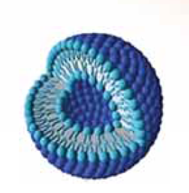 Picture of Nanoliposomes SAP