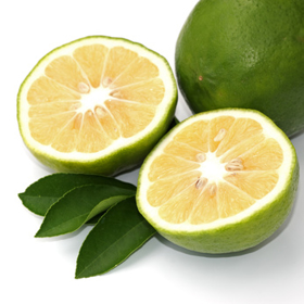 "Picture of Essential oil ""Bergamot """