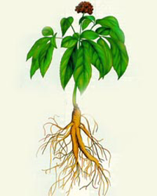 Picture of Liposomas de Ginseng