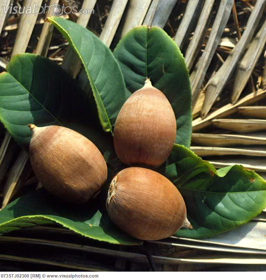 Picture of Babassu oil