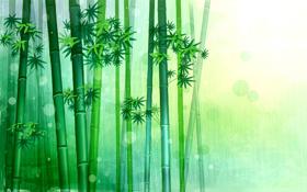 """Immagine di Fragranza """"Bamboo savon"""""""