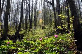 """Immagine di Fragranza """"Fiori di bosco"""""""
