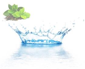 """Picture of Agua destilada """"Te' verde"""""""