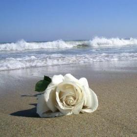 """Picture of Fragranza """"Rosa marina"""""""