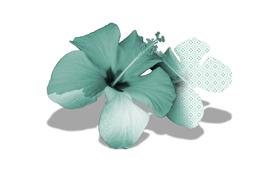"""Picture of Refill per diffusore ambiente """"Incanto esotico"""""""