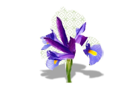 """Immagine di Refill per diffusore ambiente """"Iris"""""""