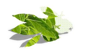 "Immagine di Refill per diffusore ambiente ""Tè verde"""