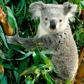 Picture of Fragranza Sogno australiano